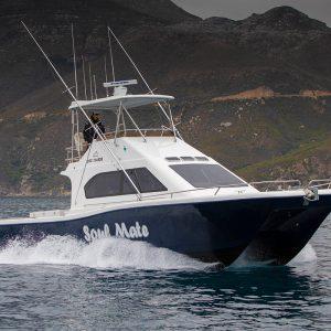 Magnum 44 Power Catamaran Walkaround Model